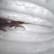"""Collapsed plumbing line with trapped debris and chlorine damage. Goto """"Downloads"""" to see video."""